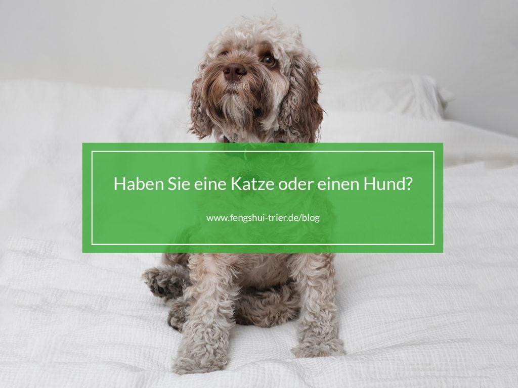 hund_oder_katze_fengshuitrierblog