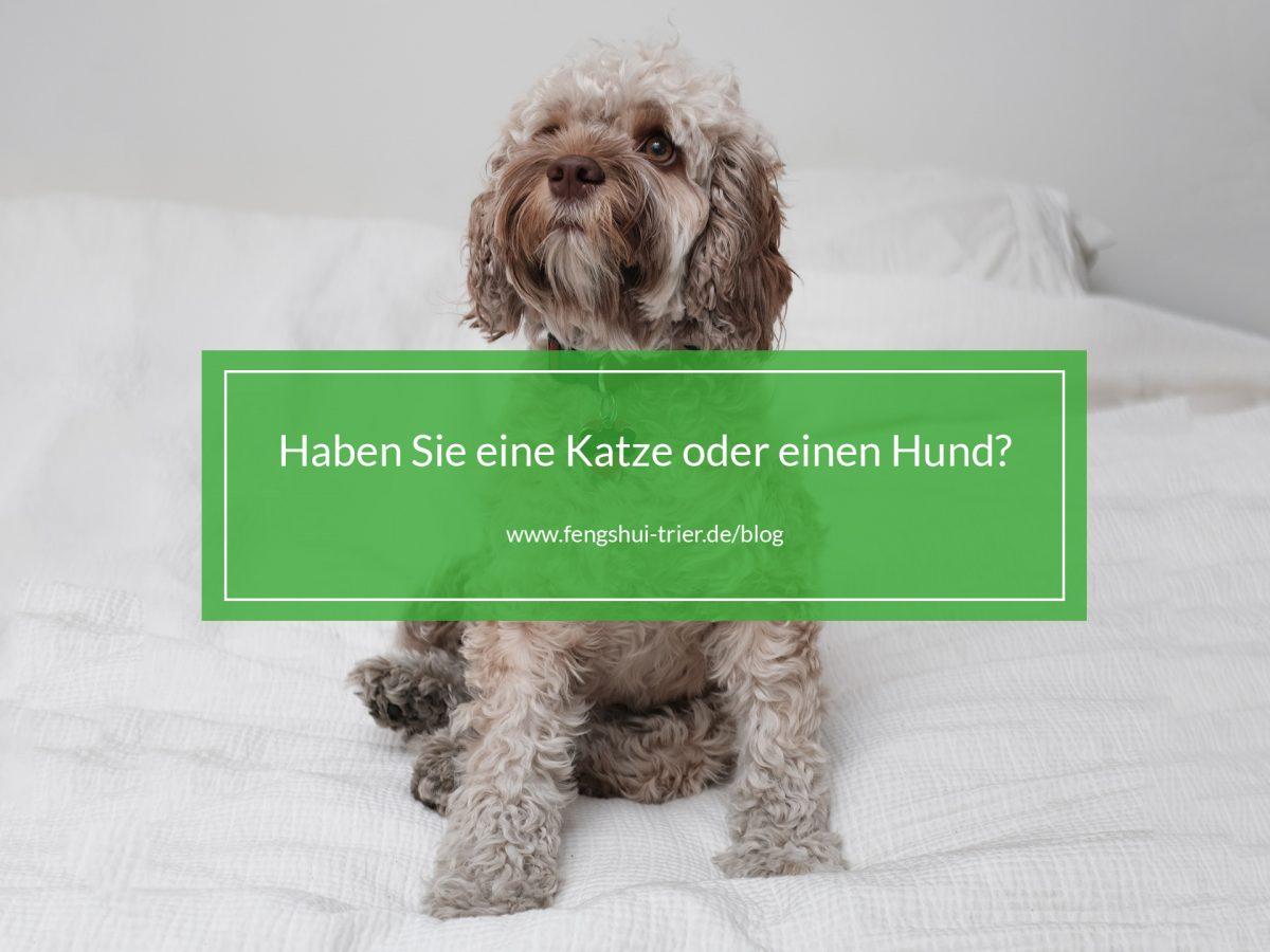 Ein Hund der auf dem Bett sitzt