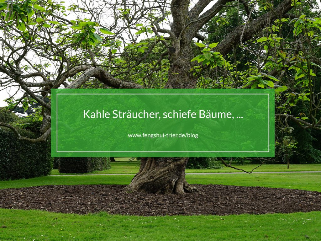 kahle_straeucher_fengshuitrierblog